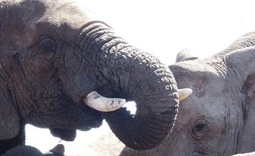 4677067_Elefanten