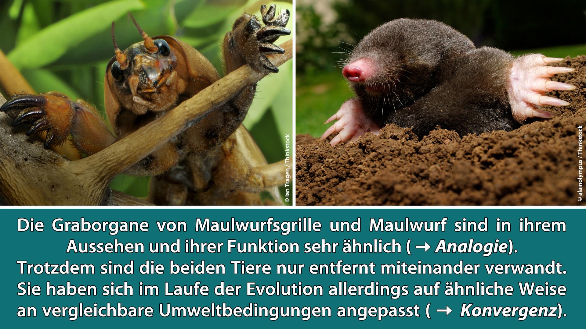 Evolution und Optimierung